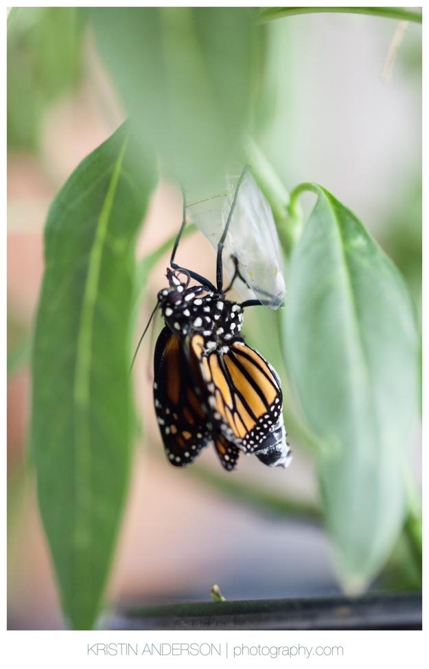 2017_9_12_Butterfly&Wood-6007