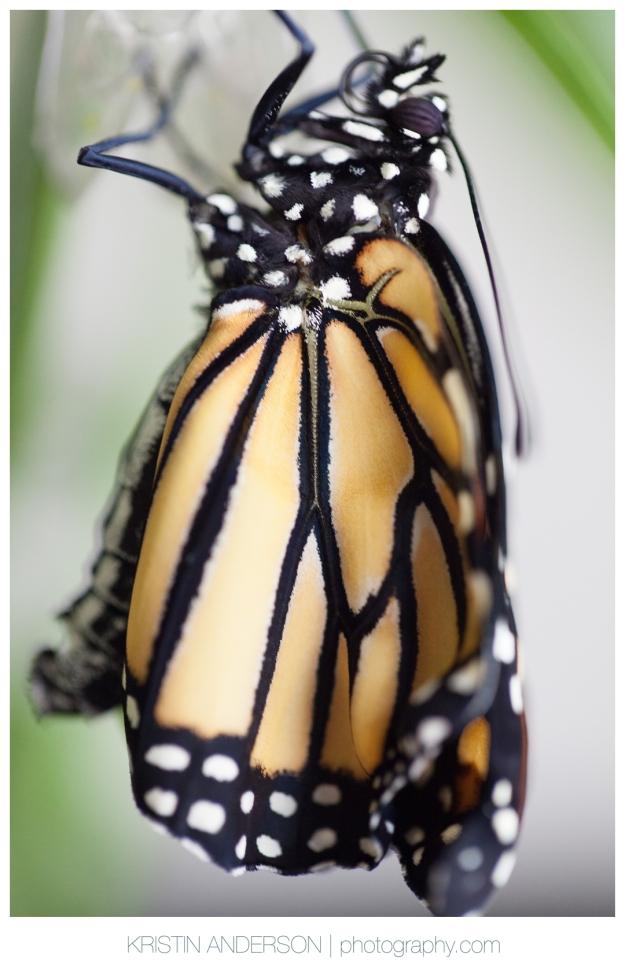 2017_9_12_Butterfly&Wood-6039