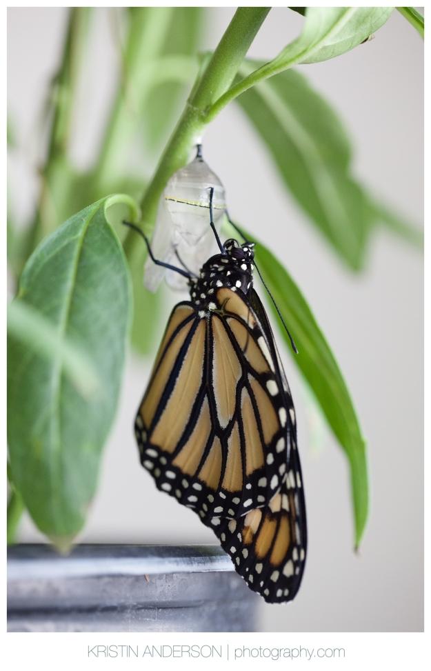 2017_9_12_Butterfly&Wood-6084