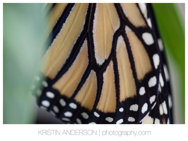 2017_9_12_Butterfly&Wood-6104
