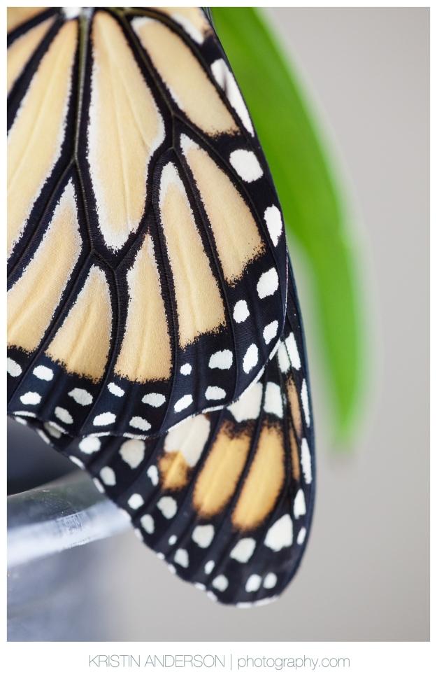 2017_9_12_Butterfly&Wood-6106