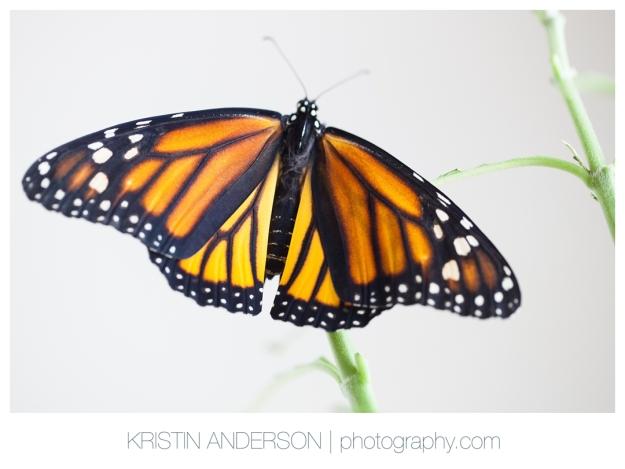 2017_9_12_Butterfly&Wood-6130