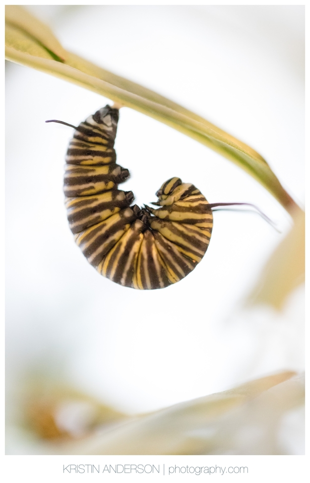 2017_9_15_butterfly-0441